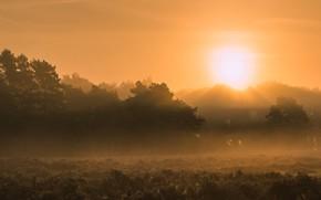 Картинка поле, солнце, туман, рассвет