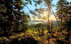Картинка лес, туман, восход, солнечно
