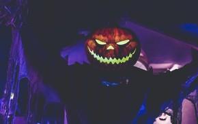 Картинка Хэллоуин, парень, светильник Джека