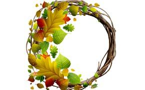 Картинка листья, ветки, белый фон