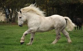 Картинка лошадь, луг, грива