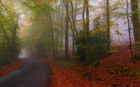 Картинка дорога, осень, лес, природа, парк, листва, шоссе