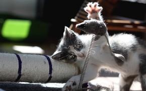 Картинка свет, поза, котенок, игрушка, игра, мышь, мышка, котёнок