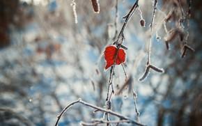 Картинка зима, сердце, листок
