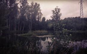Картинка Дерево, Столбы, Озера