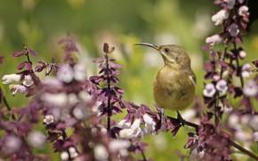Картинка цветы, ветка, птичка, кроха