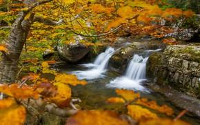 Картинка осень, деревья, ветки, река, водопад