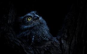Картинка ночь, природа, дерево, сова, птица, дупло
