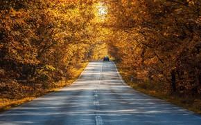 Картинка дорога, машина, осень, лес, листья, свет, деревья, природа, парк, путь, ветви, желтые, шоссе, тени, автомобиль, …