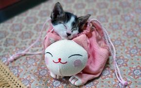 Картинка кошка, котенок, розовая, сон, лапки, малыш, мордочка, спит, сумочка, котёнок, мешок, киса, пятнистый, мешочек, зажмурился