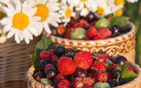 Картинка лето, ягоды, малина, ромашки, земляника, крыжовник, чёрная смородина