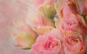 Картинка розы, букет, розовые, мазки