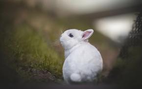 Картинка малыш, боке, крольчонок, белый кролик, Людмила Богуш