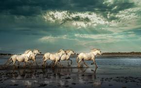 Картинка небо, лучи, река, кони, лошади