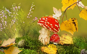 Обои осень, грибы, трава, клоп, листья, мох, шишки, природа, мухоморы, Vlad Vladilenoff, ветка, макро