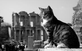 Картинка кошка, кот, чёрно-белая, развалины, монохром, Турция, котейка, Эфес