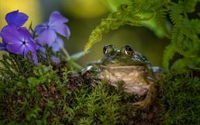 Картинка взгляд, цветы, лягушка
