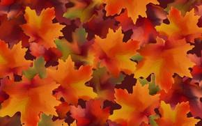 Картинка осень, листья, фон, colorful, background, autumn, leaves, осенние, maple