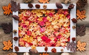 Картинка осень, листья, фон, дерево, доски, colorful, орехи, клен, шишки, wood, background, autumn, leaves, осенние, maple