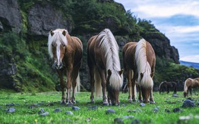 Картинка взгляд, горы, природа, скалы, кони, лошади, грива, трио