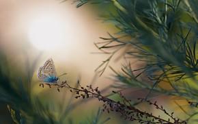 Картинка лето, трава, макро, природа, бабочка, насекомое