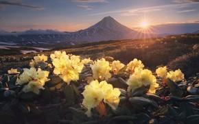 Картинка солнце, лучи, пейзаж, цветы, горы, природа, утро, кустарники, рододендроны