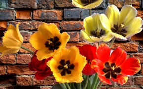Картинка букет, весна, тюльпаны, супер