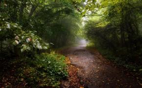 Картинка осень, деревья, парк, листва, тропинка
