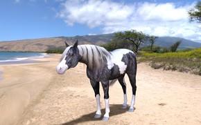 Картинка песок, море, пляж, небо, взгляд, облака, горы, природа, рендеринг, дерево, конь, берег, лошадь, водоем, пятнистая