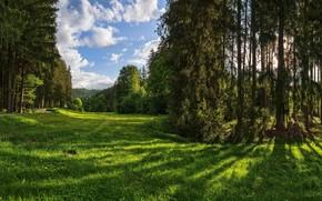 Картинка зелень, лес, небо, трава, солнце, облака, деревья, парк, Германия, тропинка, Naturpark Augsburg