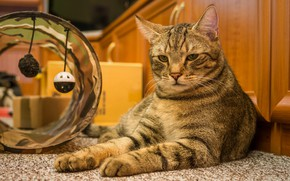 Картинка кошка, кот, игрушки, лежит