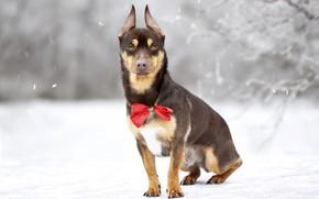 Картинка зима, природа, друг, собака