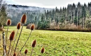 Картинка поле, лес, природа