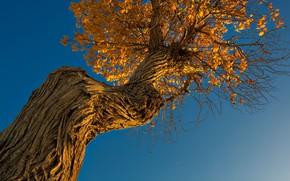 Картинка осень, небо, дерево, ствол