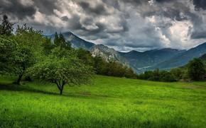 Картинка трава, горы, Франция, Прованс, Provence