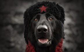 Обои взгляд, звезда, собака