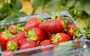 Картинка ягоды, клубника, контейнер, лоток
