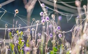Картинка осень, трава, природа, паутина