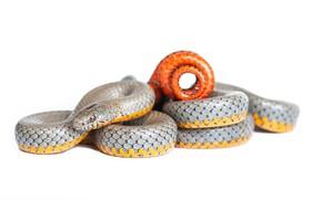 Картинка змея, белый фон, серая, José Gabriel Martínez Fonseca Follow