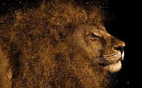 Картинка морда, лев, арт, грива, зверь, черный фон