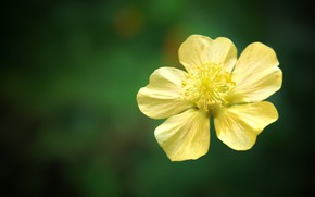 Картинка flower, nature, yellow, macro, colour, vitage