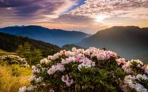 Картинка лес, небо, солнце, облака, свет, деревья, пейзаж, цветы, горы, природа, туман, рассвет, холмы, склоны, вершины, …