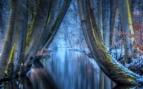 Картинка отражение, природа, иней, зима, деревья, мороз, речушка, Jan-Herman Visser, лес