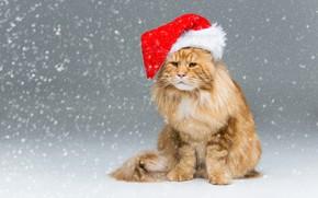 Картинка зима, кошка, кот, взгляд, снег, рыжий, Рождество, Новый год, серый фон, сидит, снегопад, мейн-кун, колпак …