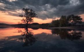 Картинка Отражение, Дерево, Озеро, Рассвет