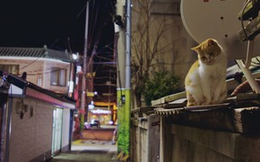 Картинка кошка, Кот, рыжий кот, милый кот, уличный кот, улица ночь, кот на крыше