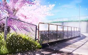 Картинка Весна, Сетка, Ограждение, Цветущее дерево