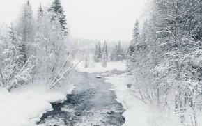 Картинка зима, лес, река