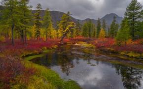 Картинка осень, трава, деревья, пейзаж, горы, тучи, природа, берега, кустарники, Владимир Рябков, Колыма, озерко