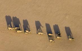Картинка тень, Африка, слоны, Намибия, стадо, Region Damaraland